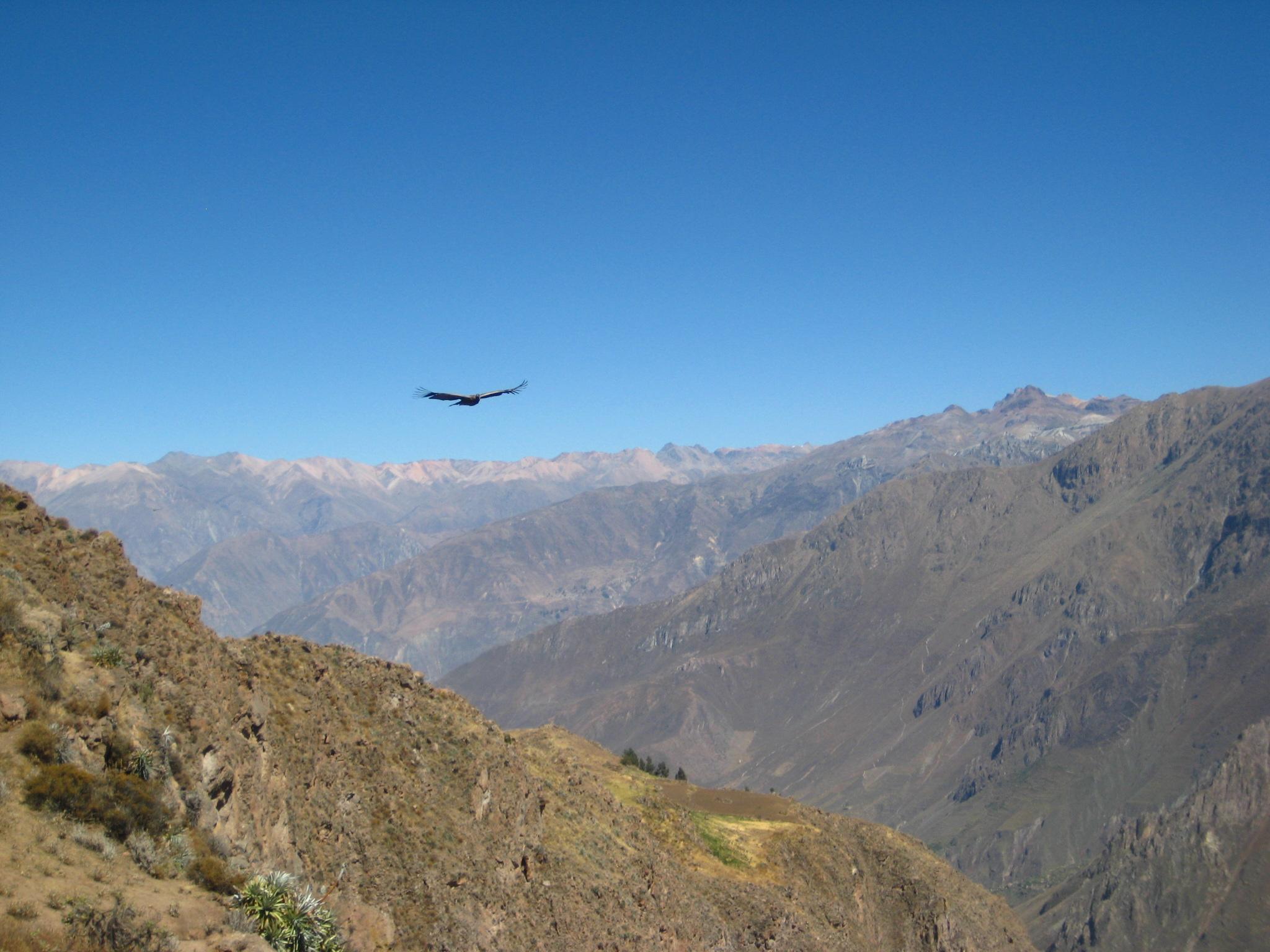 Spotting condors at Cruz del Condor