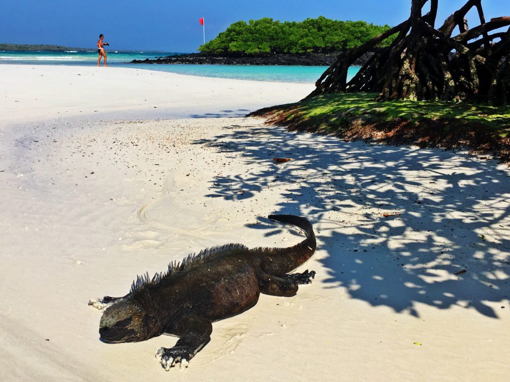 Guide to Santa Cruz Island in the Galapagos, Girl Who Travels the World