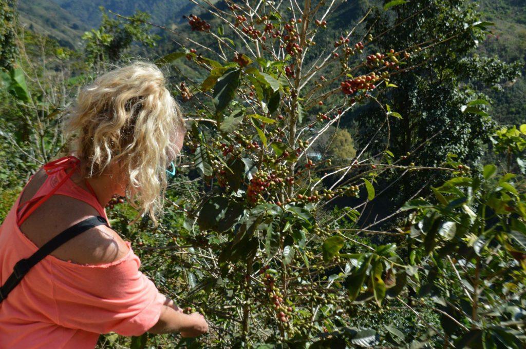 Volunteering on a Coffee Farm