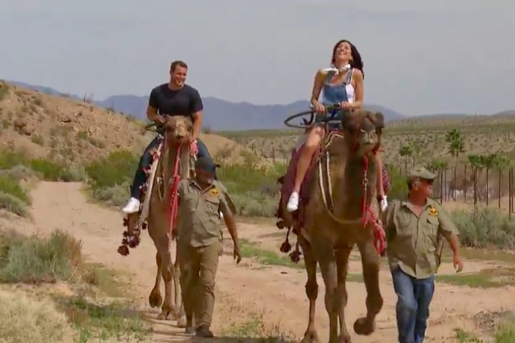 Best Hotels of Becca the Bachelorette's Season, Girl Who Travels the World, Camels in Vegas