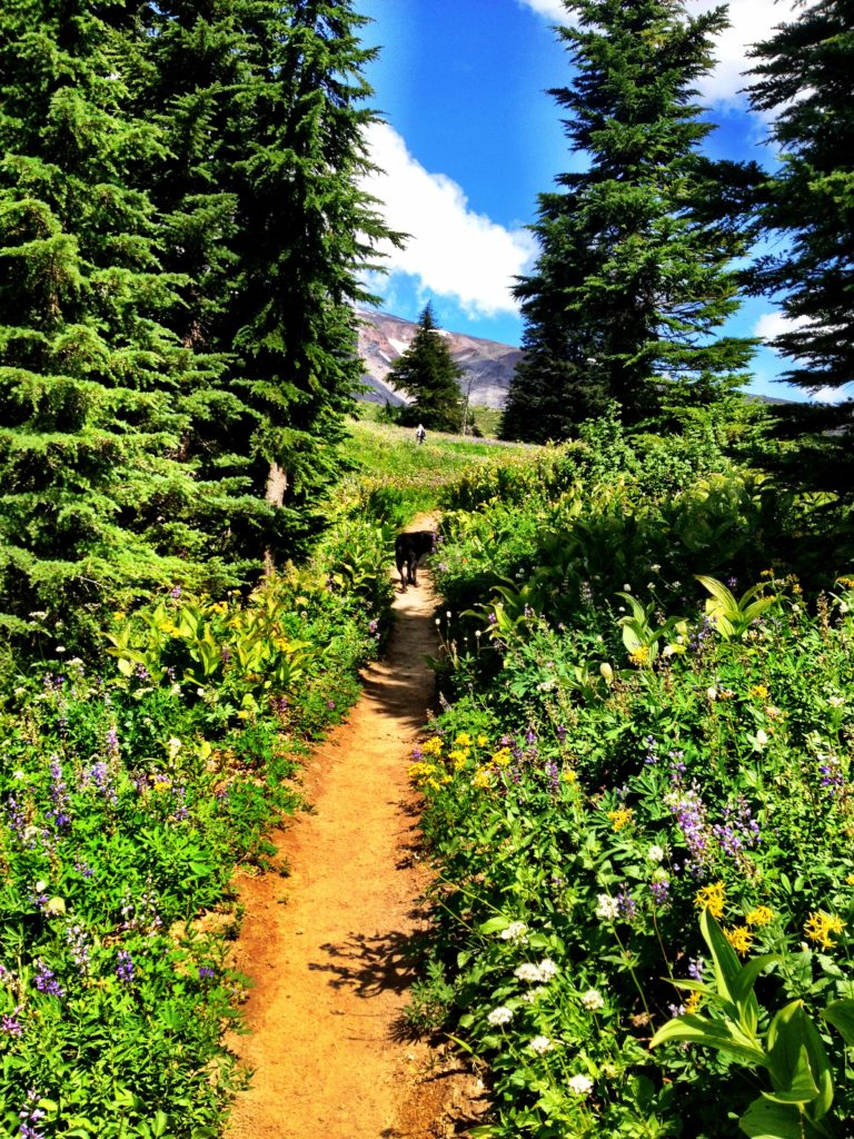 How to Get to Paradise Park Hike in Oregon, Girl Who Travels the World