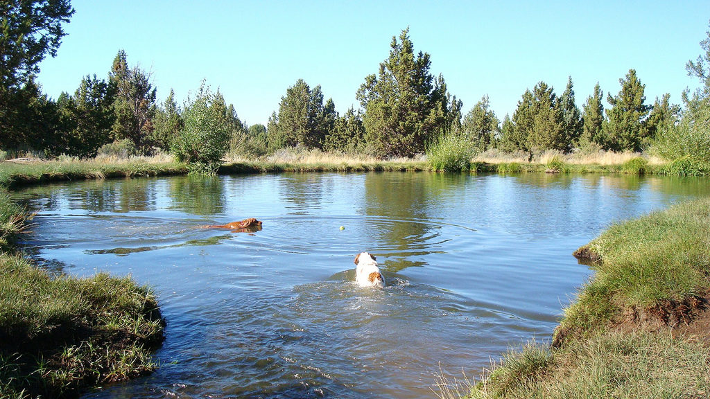 Best Off-Leash Dog Parks in Bend, Oregon, Girl Who Travels the World, Big Sky