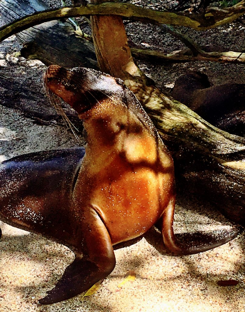 Best Things to Do in Puerto Ayora in the Galapagos Islands, Girl Who Travels the World
