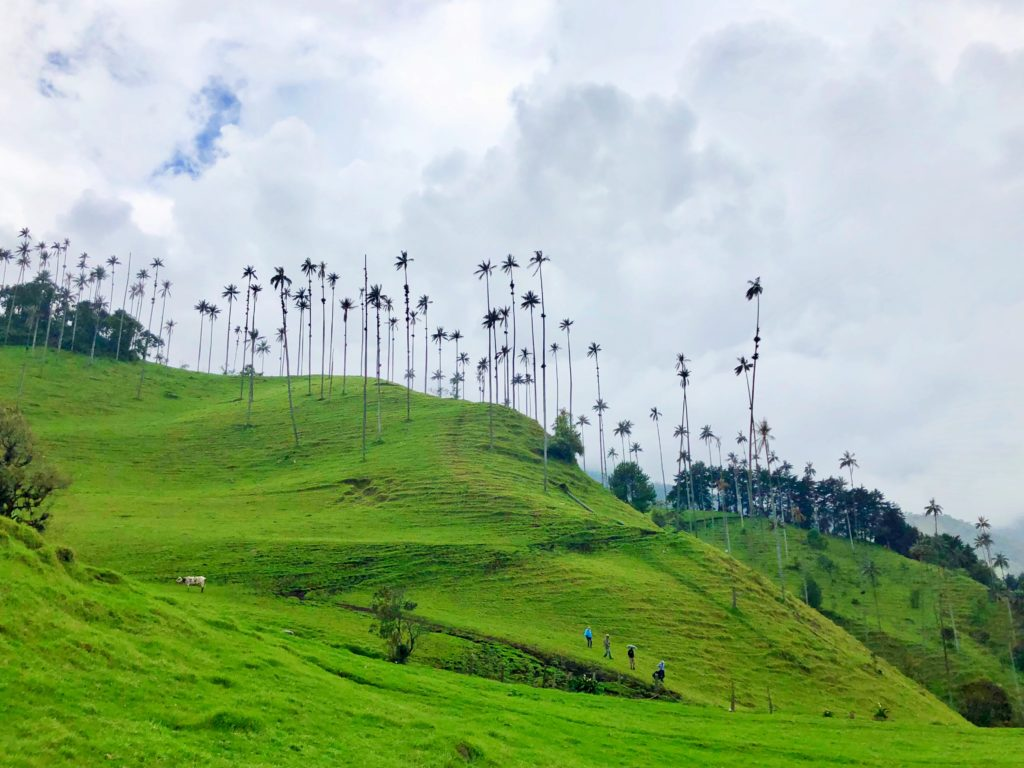 Hiking in Colombia's Cocora Valley by Salento, Girl Who Travels the World