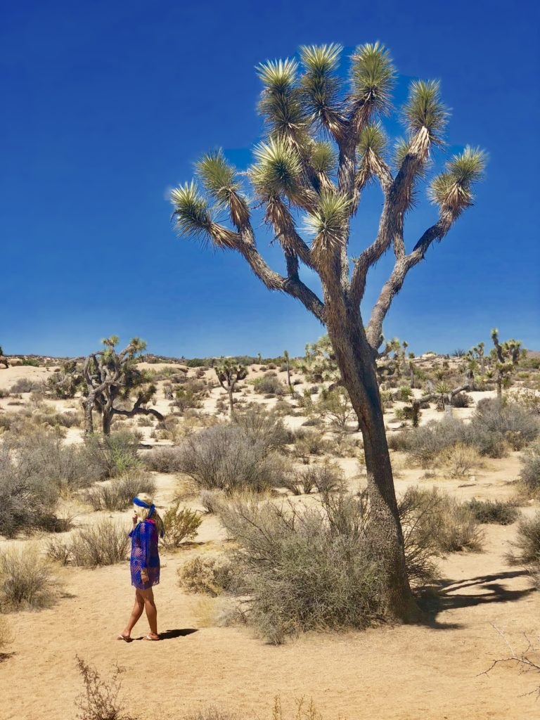 Girl's Road Trip to Joshua Tree ~ Video Post, Girl Who Travels the World