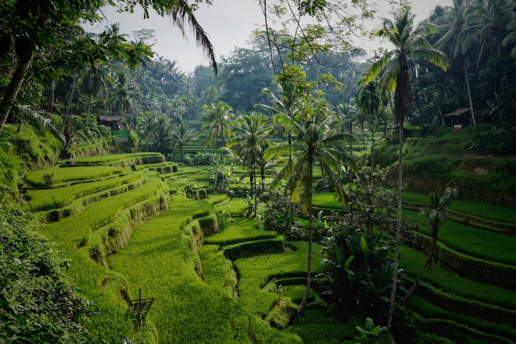 Best Warm Weather Beach Vacations for January & February, Girl Who Travels the World, Bali Rice Fields by Ubud