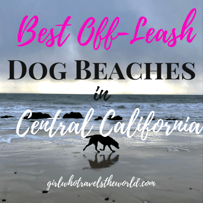 Best Off-Leash Dog Beaches in Central California