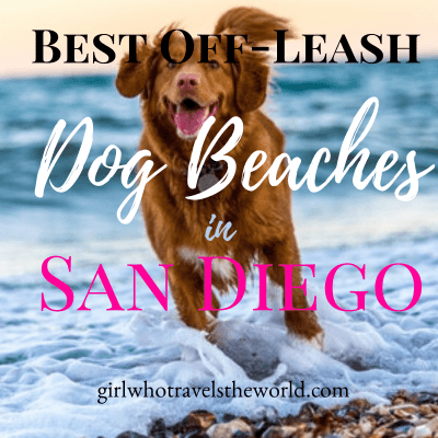 Best Off-Leash Dog Beaches in San Diego