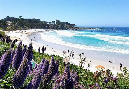 Best Off-Leash Dog Beaches in Central California, Carmel Beach