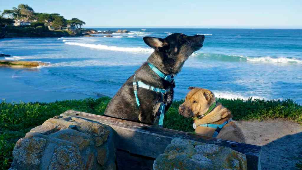 Best Off-Leash Dog Beaches in Carmel, Girl Who Travels the World