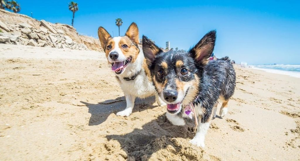 Best Dog-Friendly Destinations on the West Coast, Girl Who Travels the World