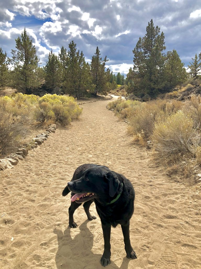 Guide to a Perfect 3-Day Weekend in Bend, Oregon, Girl Who Travels the World, Pine Nursery Park