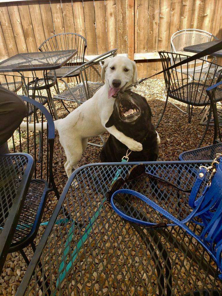Best Glucosamine for Older Labrador Retrievers, Girl Who Travels the World