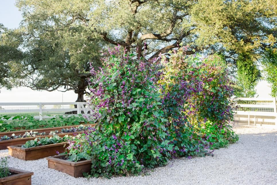 How to Create a Joanna Gaines-Worthy Garden, Girl Who Travels the World