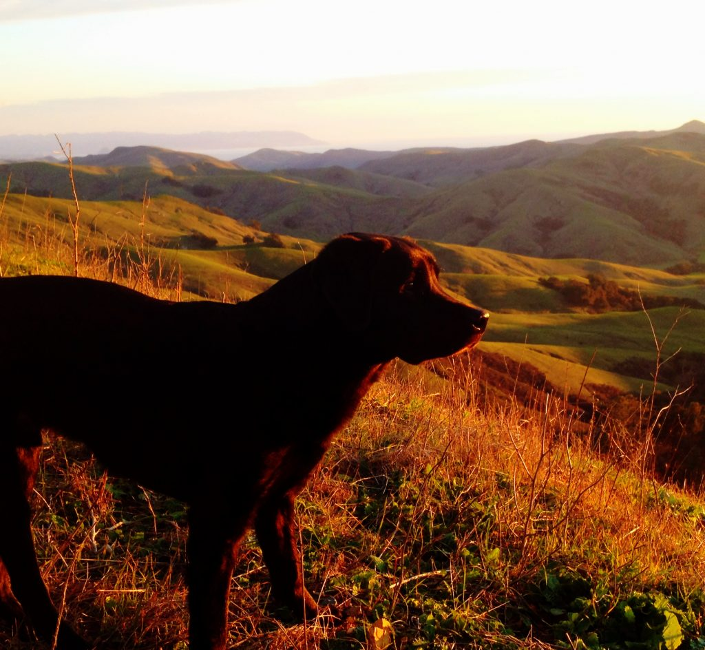 How to Road Trip with Your Dog in Style, Girl Who Travels the World, Best Glucosamine for Older Labrador Retrievers