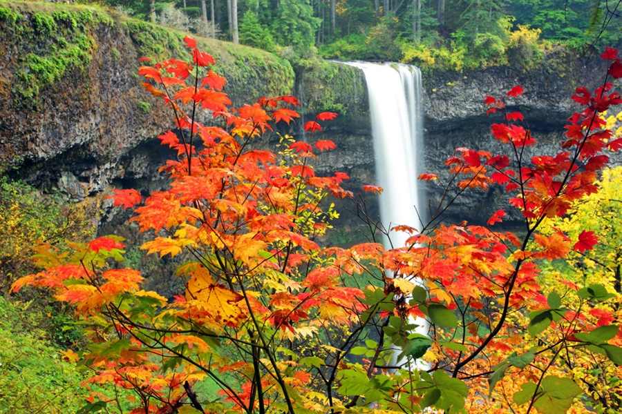 Where to Find Awesome Fall Color in Oregon, Girl Who Travels the World, Silver Falls