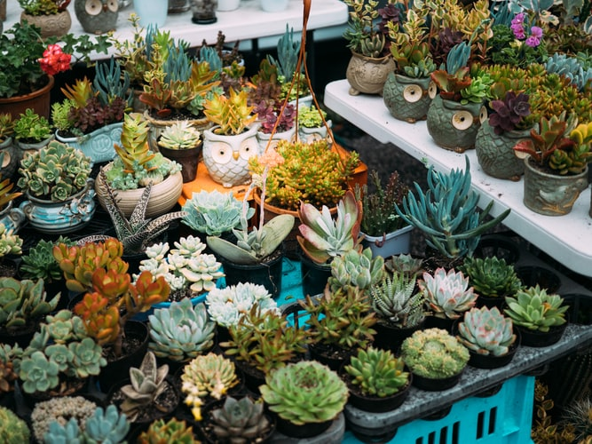 Best Indoor Plants to Help Purify Air, Girl Who Travels the World