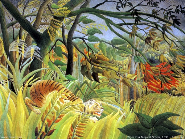 Tiger-in-tropical-storm-surprised-1891