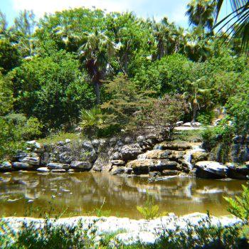 Explore: Leon Levy Native Plant Preserve