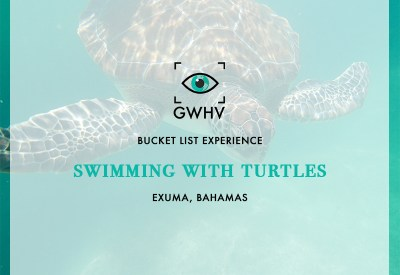 Bucket List Experience: Swimming With Sea Turtles