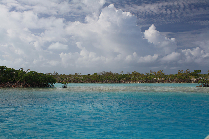 Bahamas Discovery Quest - Mangroves