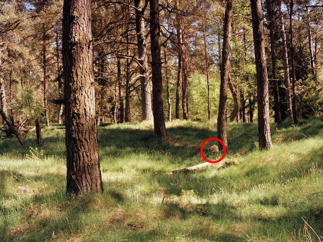 Spot the Sniper - The Art of Camouflage - Girly Design Blog