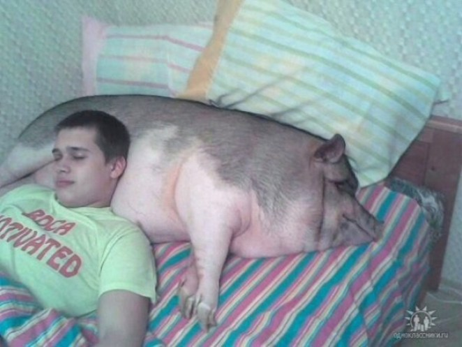 pig dating site