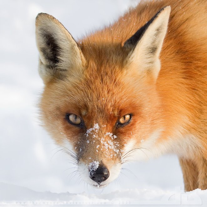 30 Gorgeous Photos of Wildlife - Outside is Free