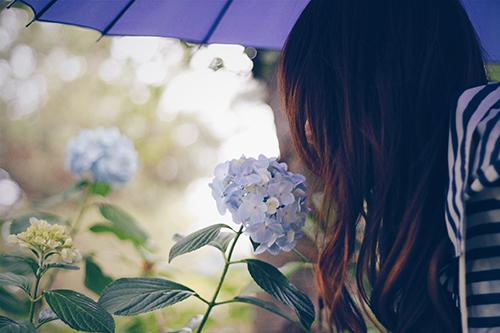 紫陽花(あじさい)の香りを確認する女の子