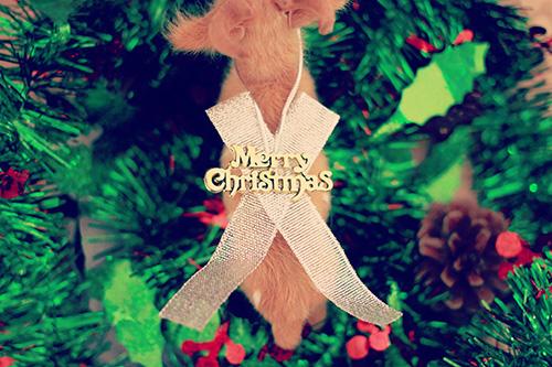 「クリスマスツリー」「トナカイ」「文字アート」「真上から」などがテーマのフリー写真画像