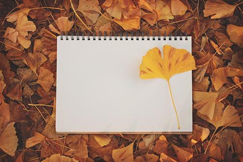 「イチョウ」「スケッチブック」「秋」「落ち葉」などがテーマのフリー写真画像