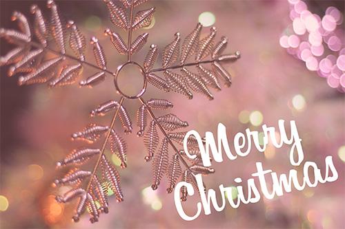 「クリスマスツリー」「文字入り」などがテーマのフリー写真画像