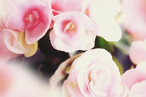 咲き乱れるピンクの花