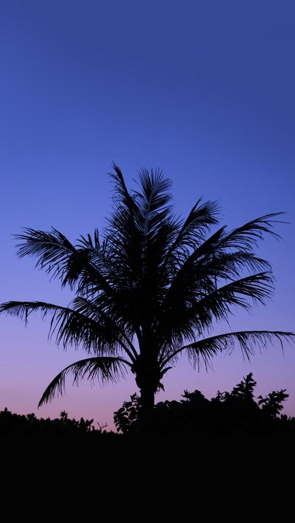 【オシャレなiPhone壁紙】ヤシの木のシルエットと夕暮れの美しいグラデーション