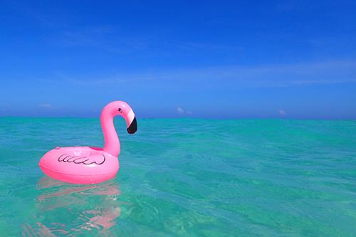 「ドリンクホルダー」「フラミンゴ」「リゾート」「夏」「海」「空」などがテーマのフリー写真画像
