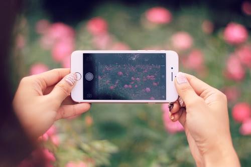 花を撮影中のスマートフォン(横向き)
