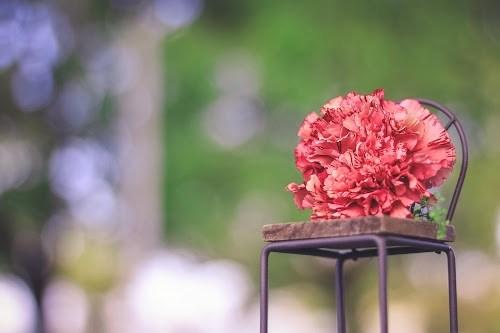 「カーネーション」「春」「母の日」「花」「花束」などがテーマのフリー写真画像