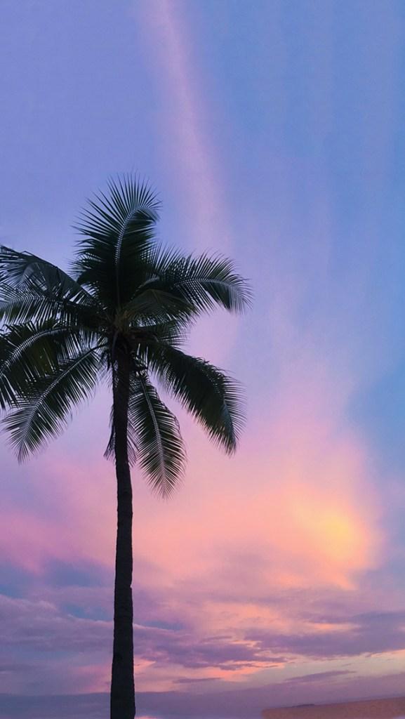 【オシャレなiPhone壁紙】紫×ピンクの夕焼け空とヤシの木のシルエット