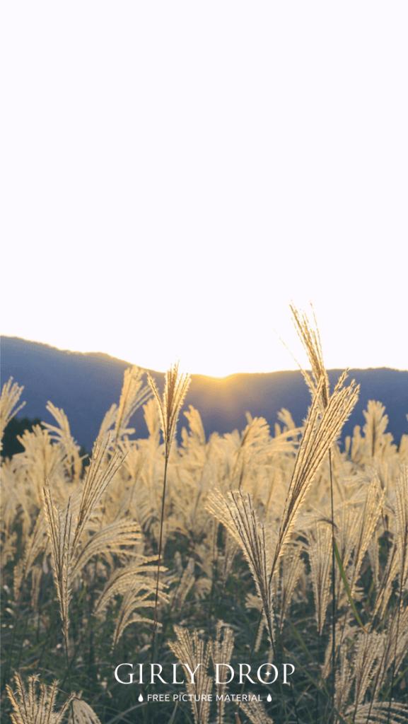 【オシャレなiPhone壁紙】目の前に広がる美しいススキ畑