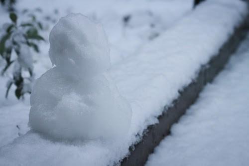 「冬」「植物」「雪」などがテーマのフリー写真画像