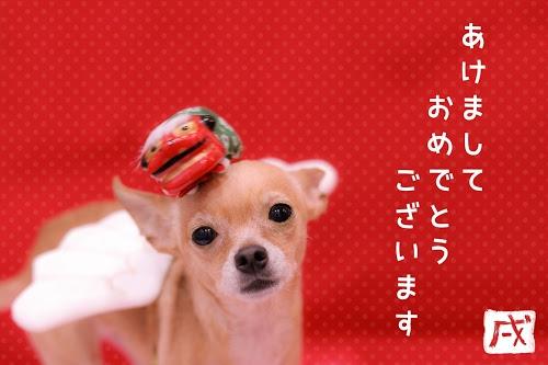 「2018」「あけおめ画像」「チワワ」「ピンシャー」「年賀状」「戌年」「文字入り」「犬」「獅子舞」などがテーマのフリー写真画像