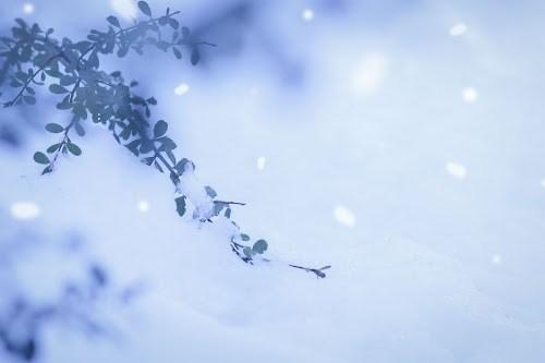「冬」「雪」「雪だるま」などがテーマのフリー写真画像