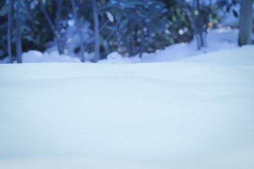 「冬」「雪」などがテーマのフリー写真画像