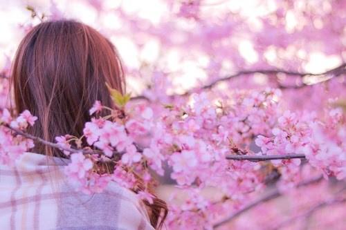 「女性・女の子」「春」「桜」「花」などがテーマのフリー写真画像