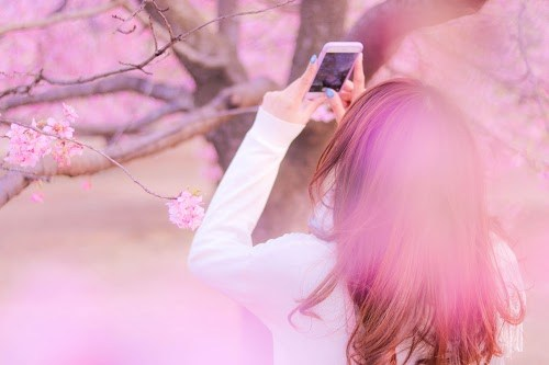 フリー写真素材:インスタにあげるべく、ぐぐっと背伸びして桜を撮影する女の子