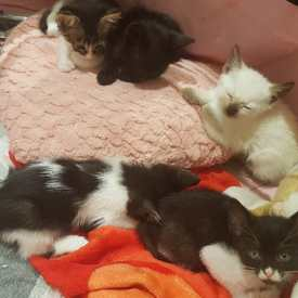 5 gatets en adopció