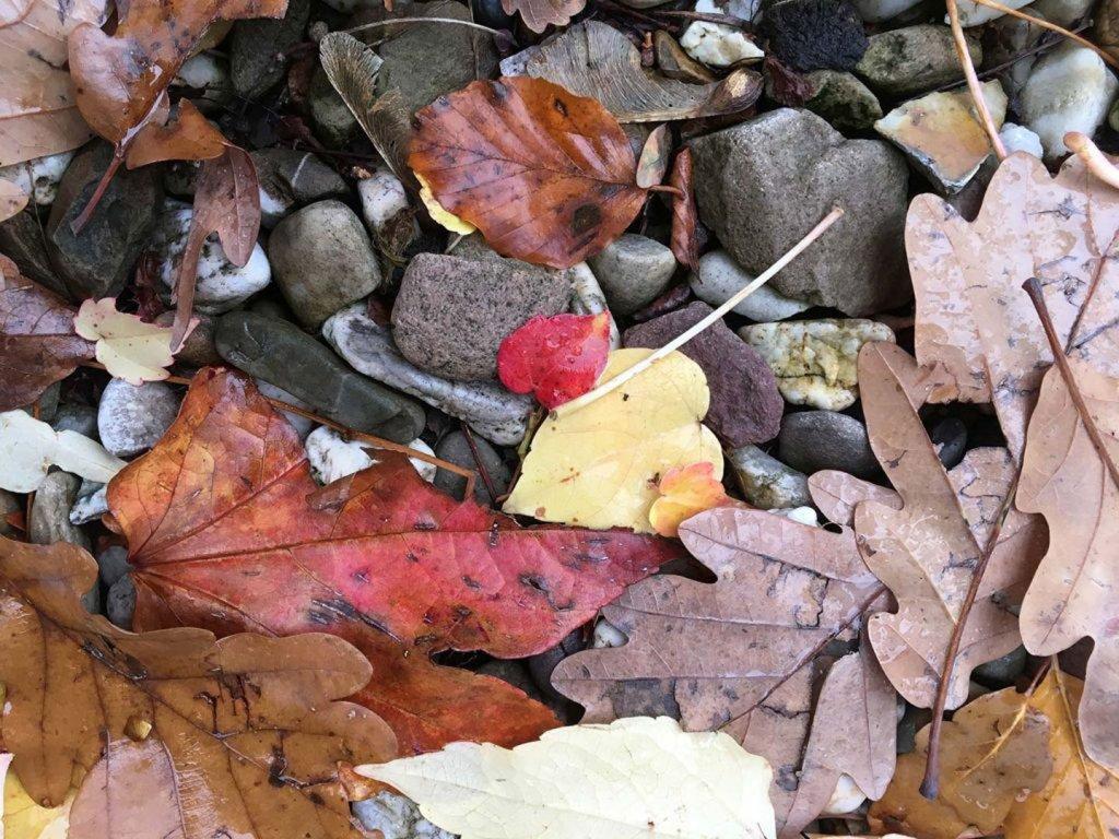 Giselheid Schulz-Ëberlin, Autorin, Eigen-Sinn-Coach, Lebensbegleitung, heitere Gelassenheit im Herbst, Herbstblätter, G wie Gelassenheit