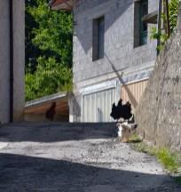 Bodonia, Italy