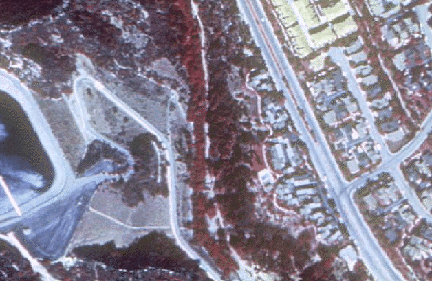 This image shows a portion of Topanga, California taken from a USGS DOQ.
