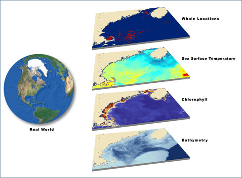 The New England Aquarium combines multiple datasets to illustrate and analyze whale locations in the Gulf of Maine.